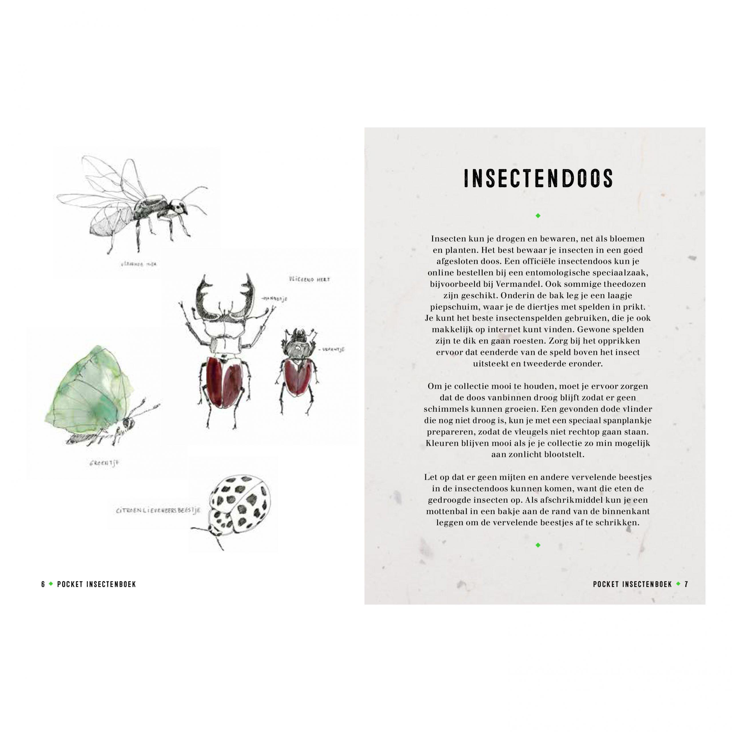 Snor-insecten