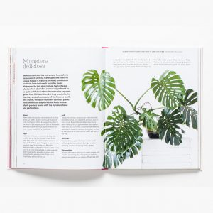 How-To-Raise-A-Plant-Laurence-King
