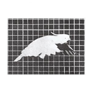 muyenbridge-papegaai-3d-kaart