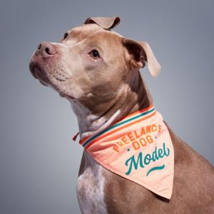 freelance-dog-model-dog-bandana-brass-monkey-goods-galison